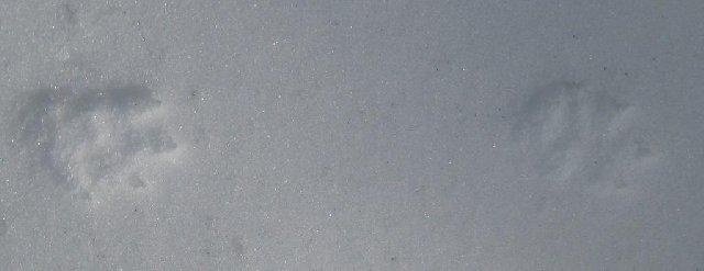 1462713.jpg