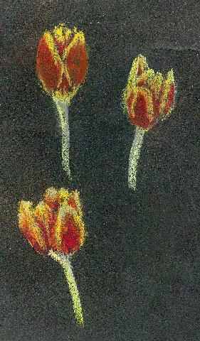 1350010.jpg